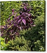Garden Color At Woodward Park 8f Acrylic Print