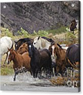 Gaucho With Herd Of Horses Acrylic Print