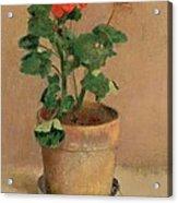 Geraniums In A Pot Acrylic Print