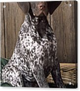 German Short-haired Pointer Dog Acrylic Print