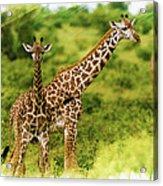 Mom Giraffe And Little Joey Acrylic Print
