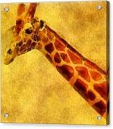 Giraffe Painting Acrylic Print by Dan Sproul