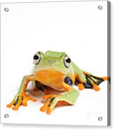 Gliding Frog Acrylic Print by Scott Linstead