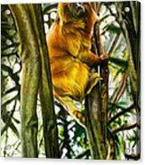 Gold Mane Acrylic Print
