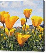 Golden Poppies Impasto Acrylic Print