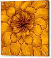 Golden Sunshine - Dahlia Acrylic Print