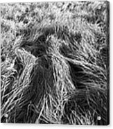 Grass In Black And White Acrylic Print