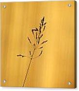 Grass Silhouette Acrylic Print