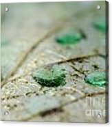 Green Drops Acrylic Print