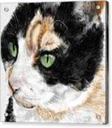 Green Eyed Cat Acrylic Print