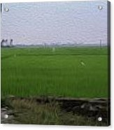 Green Fields With Birds In Kerala Acrylic Print