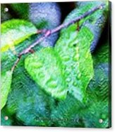 Green Leaf As A Painting Acrylic Print