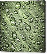 Green Leaf With Raindrops Acrylic Print