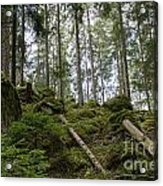 Green Untouched Forest Acrylic Print