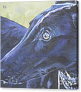 Greyhound Acrylic Print by Lee Ann Shepard