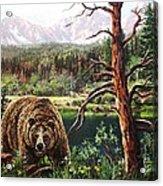 Grizzley Acrylic Print by W  Scott Fenton