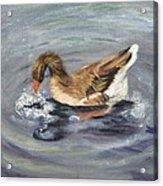 Gus The Goose Acrylic Print