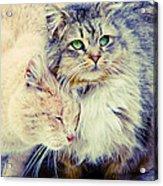 Gutter Kitties Seven Acrylic Print