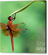Hanging On Acrylic Print