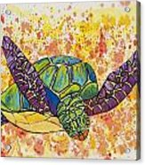 Hawaiian Sea Turtle  Acrylic Print