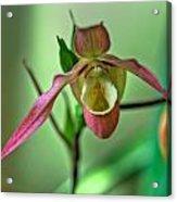 Hdr - Flower Acrylic Print