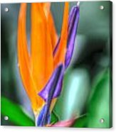 Hdr - Flowers Acrylic Print