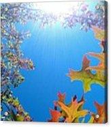 Hello Autumn Acrylic Print
