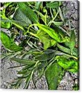 Herbs Acrylic Print