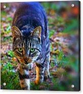 Here Kitty Kitty Acrylic Print