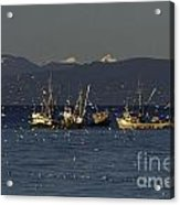 Herring Fishing Acrylic Print