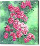 Highland Beauties Acrylic Print