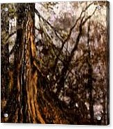 Hillside Ancient Acrylic Print