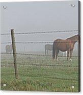Horse Pasture Acrylic Print