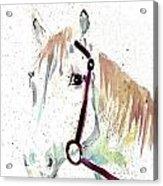 Horse Study Acrylic Print