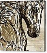 Horse Twins I Acrylic Print