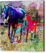 Horses Of Different Colors Acrylic Print