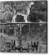 Hound Dog Weather Vane Acrylic Print