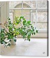 House Plant Acrylic Print
