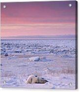Hudson Bay Landscape Acrylic Print