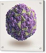 Human Rhinovirus Acrylic Print