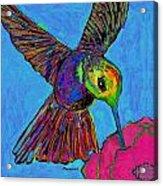 Hummingbird On Blue Acrylic Print