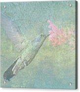 Hummingbird Tune Acrylic Print
