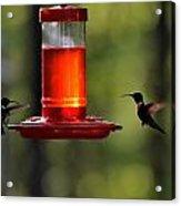 Hummingbirds 336 Acrylic Print