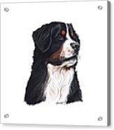 Hurley The Hunk Acrylic Print