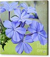 I Love Blue Flowers Acrylic Print