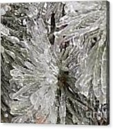 Ice On Pine Branches Acrylic Print