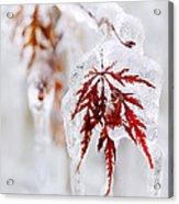 Icy Winter Leaf Acrylic Print