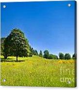 Idyllic Landscape Acrylic Print