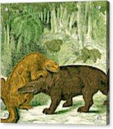 Iguanodon Biting Megalosaurus Acrylic Print