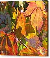 Illumining Autumn Acrylic Print